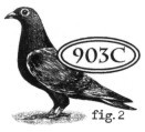 Catslife Press stempels - Pigeon fig. 2 903C